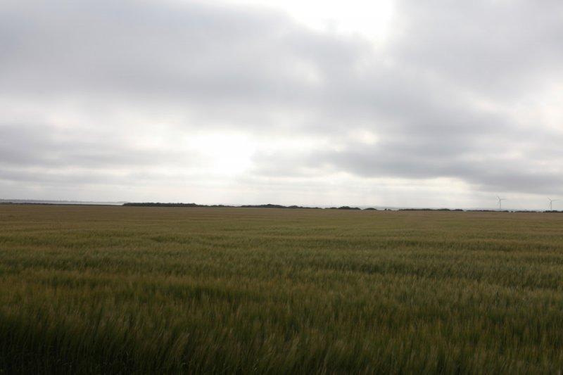Feltsted, Holstebro Kommune